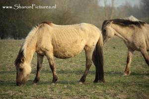 voedsel voor paarden
